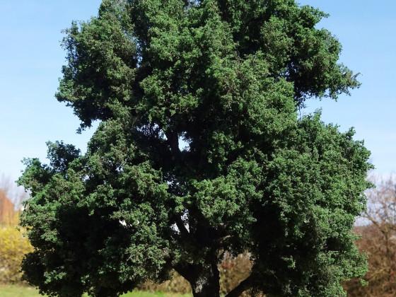 Ein Baum für den Spieltisch